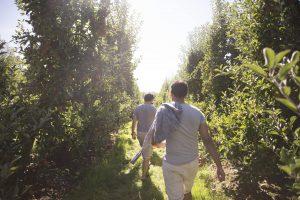 Hectre walking the field