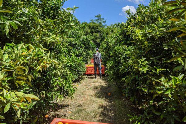 Capturing images of orange bins for Spectre