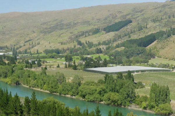 Cherri Global orchards in stunning Central Otago, NZ.