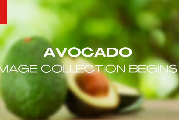 Hectre begins avocado image collection